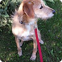 Adopt A Pet :: Luci - Saskatoon, SK