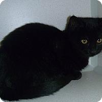 Adopt A Pet :: Monty - Hamburg, NY
