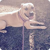 Adopt A Pet :: Bobo - South Windsor, CT