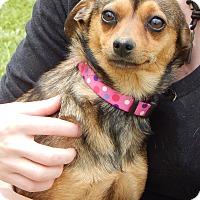 Adopt A Pet :: Grace (9 lb) Sweet Baby! - SUSSEX, NJ