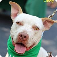 Adopt A Pet :: Chevy - Alpharetta, GA