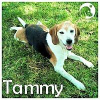 Adopt A Pet :: Tammy - Novi, MI