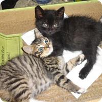 Adopt A Pet :: KITTY BUNDLE Captain'14 - New York, NY