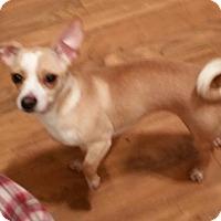 Adopt A Pet :: Bella - Baileyton, AL