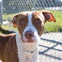 Adopt A Pet :: Waldo - Fort Collins, CO