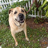 Adopt A Pet :: Lady - Fort Myers, FL