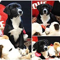 Adopt A Pet :: Deegan - Carteret/Eatontown, NJ