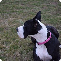 Adopt A Pet :: Idgie - COURTESY LISTING - Indianapolis, IN