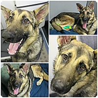 Adopt A Pet :: Rex - Forked River, NJ