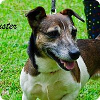 Adopt A Pet :: Buster - Daleville, AL