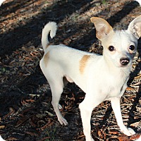 Adopt A Pet :: Buttons - Weeki Wachee, FL