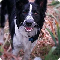 Adopt A Pet :: Lucas - Milpitas, CA