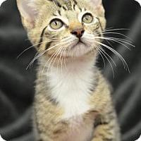 Adopt A Pet :: Andrew161061 - Atlanta, GA