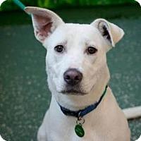Adopt A Pet :: Moo Moo - Petaluma, CA