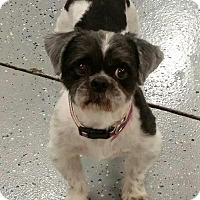 Adopt A Pet :: Kauffman Harris - Urbana, OH