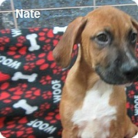 Adopt A Pet :: Nate - Bartonsville, PA