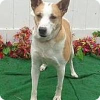 Adopt A Pet :: Dharma - Lebanon, ME