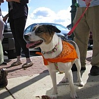 Beagle Mix Dog for adoption in Gilbertsville, Pennsylvania - Penne - Special Needs