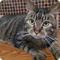 Adopt A Pet :: Sparky - Witter, AR