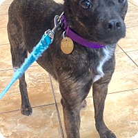 Adopt A Pet :: Hope- LOVES DOGS - Oak Ridge, NJ