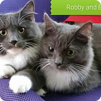 Adopt A Pet :: Bobby & Robby - Campbell, CA