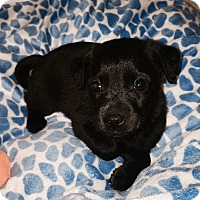 Adopt A Pet :: Ralphie - Brea, CA