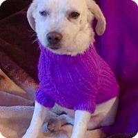 Adopt A Pet :: ANNIE - pasadena, CA
