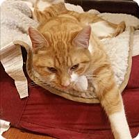Adopt A Pet :: Rosie - Sheboygan, WI