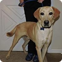 Adopt A Pet :: Maiser - Berkeley Heights, NJ