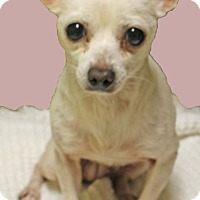 Adopt A Pet :: Shirley - Hillsboro, TX