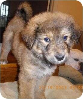 Blaze | Adopted Puppy ...