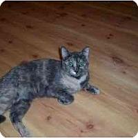 Adopt A Pet :: Amy - North Plainfield, NJ