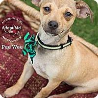 Adopt A Pet :: Peewee - Gilbert, AZ