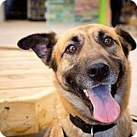 Adopt A Pet :: Molly - Saskatoon, SK