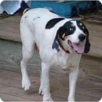 Adopt A Pet :: Dooley - E Windsor, CT