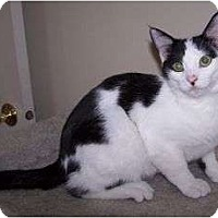 Adopt A Pet :: K-Melody2-Christoper - Colorado Springs, CO