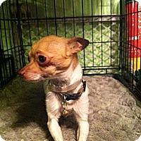 Adopt A Pet :: Flick - Garden Grove, CA