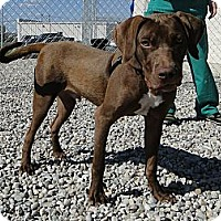 Adopt A Pet :: Lukas - Lewisville, IN