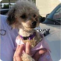 Adopt A Pet :: Annie - Conroe, TX