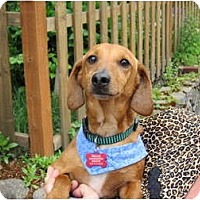Adopt A Pet :: ODIE - Portland, OR