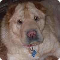 Adopt A Pet :: Osso - Newport, VT