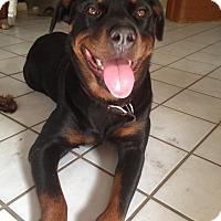 Adopt A Pet :: Daisy - Seffner, FL
