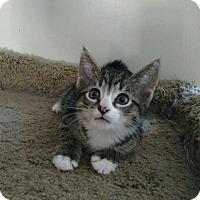 Adopt A Pet :: Forest - Richmond, VA