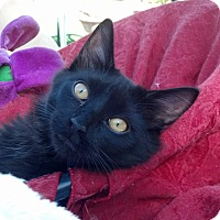 Adopt A Pet :: Indy - Scottsdale, AZ