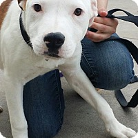 Adopt A Pet :: Brady 2 - Aurora, CO