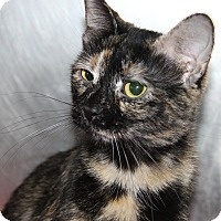Adopt A Pet :: Twilight (Spayed) - Marietta, OH