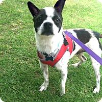 Adopt A Pet :: James likes to play! - Redondo Beach, CA