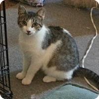 Adopt A Pet :: Elsie - Avon, NY