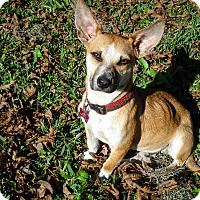 Adopt A Pet :: Jack - Savannah, GA