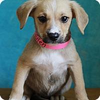 Adopt A Pet :: Ellen - Waldorf, MD